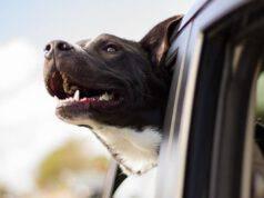 viaggiare cani gatti
