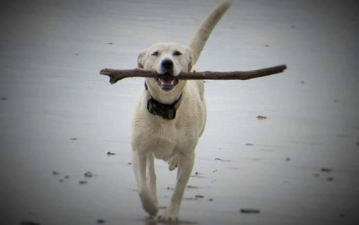 Il cane con il bastone (Foto Pixabay)