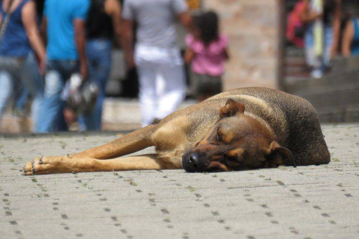 Cane in strada