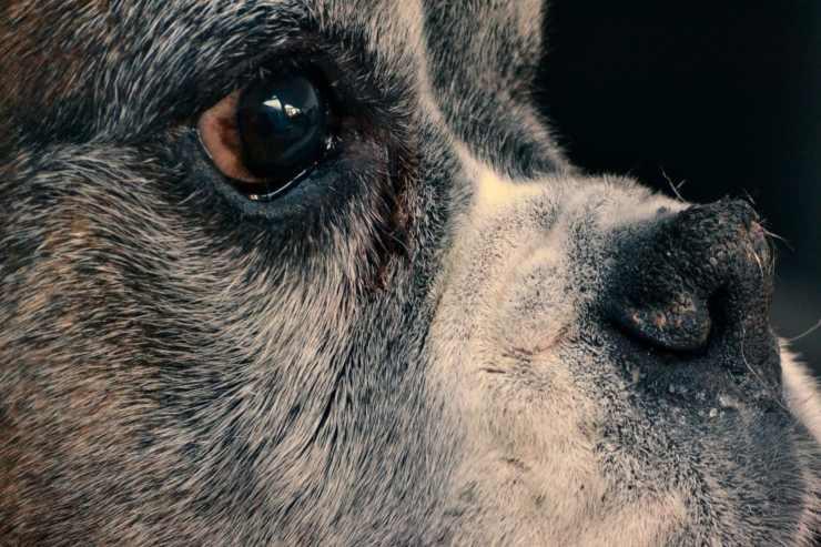 Obblighi del proprietario di un cane