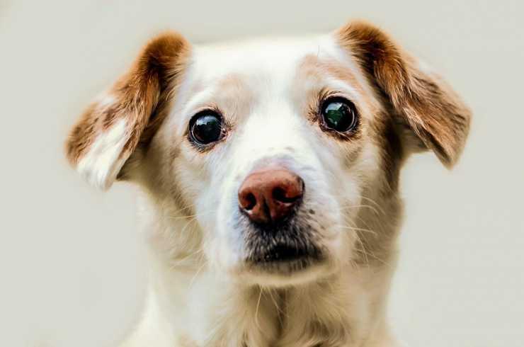 Il cane preoccupato (Foto Pixabay)
