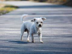 Sinistro stradale causato da animali randagi (Foto Pixabay)