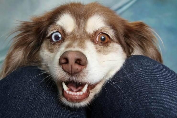 Colore definitivo degli occhi del cane