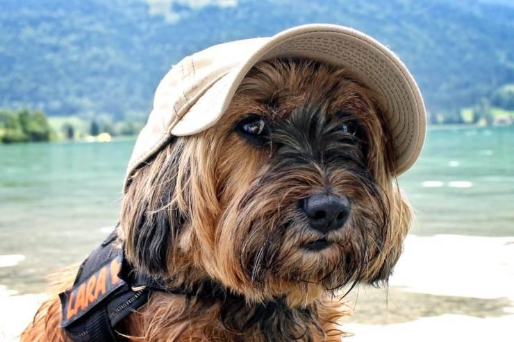 Depressione post-vacanze nel cane