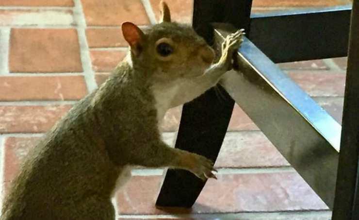 Lo scoiattolo in casa (Foto Instagram)