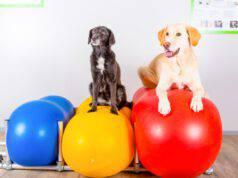 fisioterapia per il cane