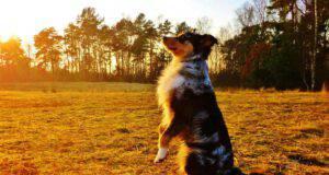 Addestrare il cane a eseguire i comandi