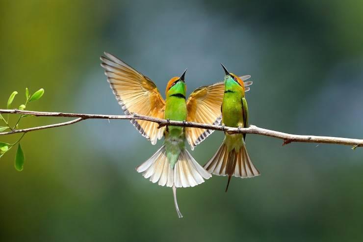 compra uccellini