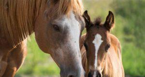Sindrome abbandono cavallo (foto Pixabay)