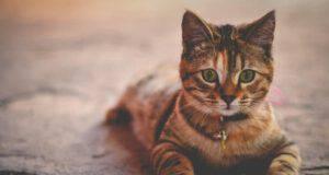 Giornata mondiale del gatto : lettere aperta al Governo