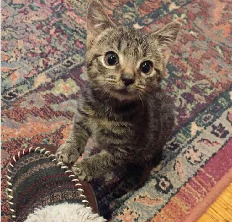 Pill Bug gattino