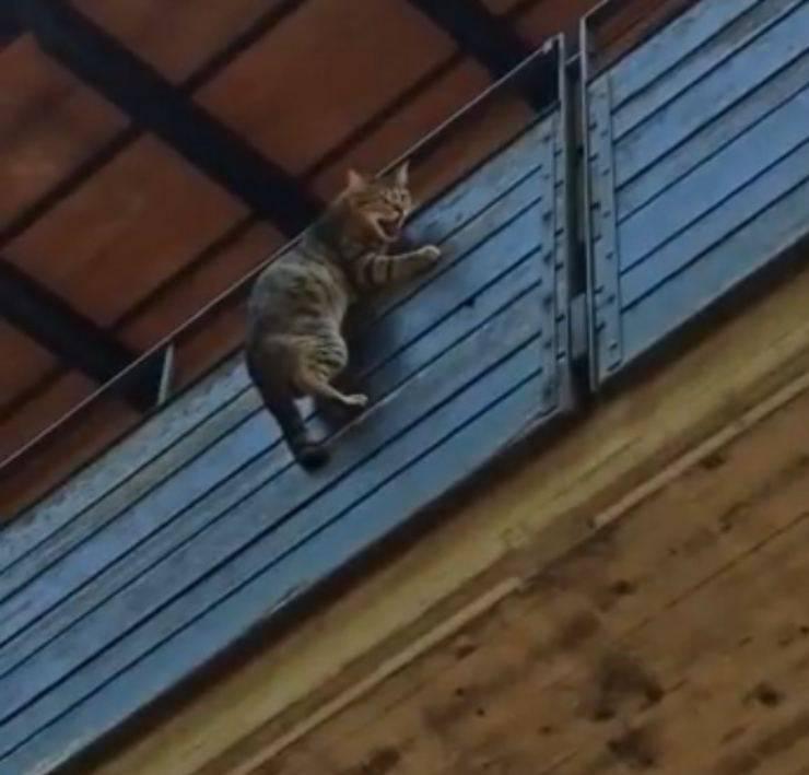 gatto appeso balcone
