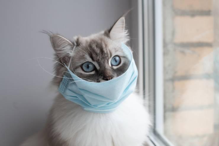gatto con mascherina