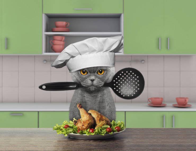 Ricette per gatti a base di pollo