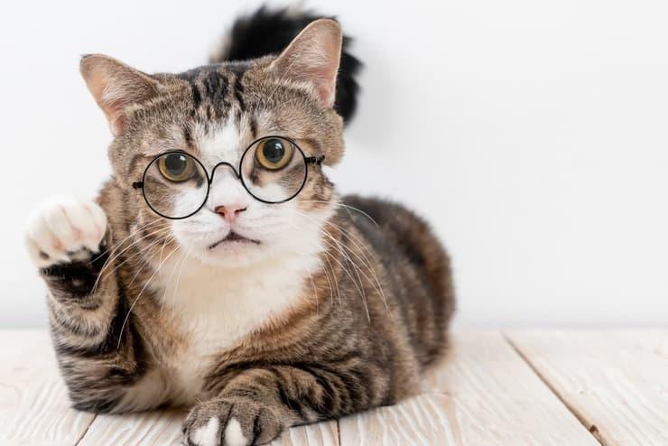 Come capire se il gatto non ci vede bene (Foto Adobe Stock)