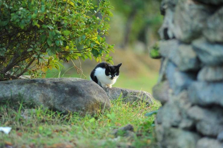 Dermatite da poxvirus nel gatto