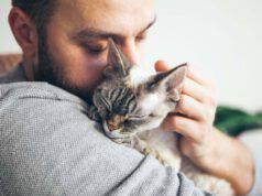 gatto dorme su petto del padrone