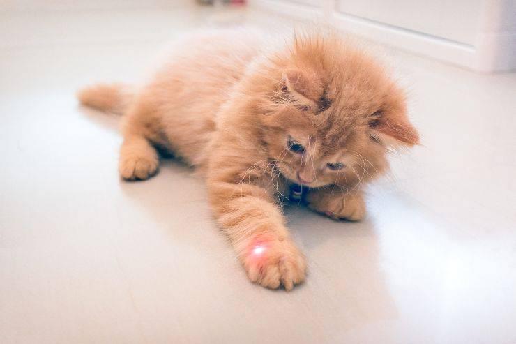 perché il gatto gratta a terra