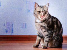 Perché il gatto lecca il pavimento