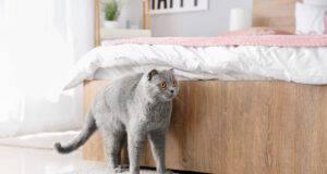 Il gatto marca il territorio in casa (Foto Adobe Stock))