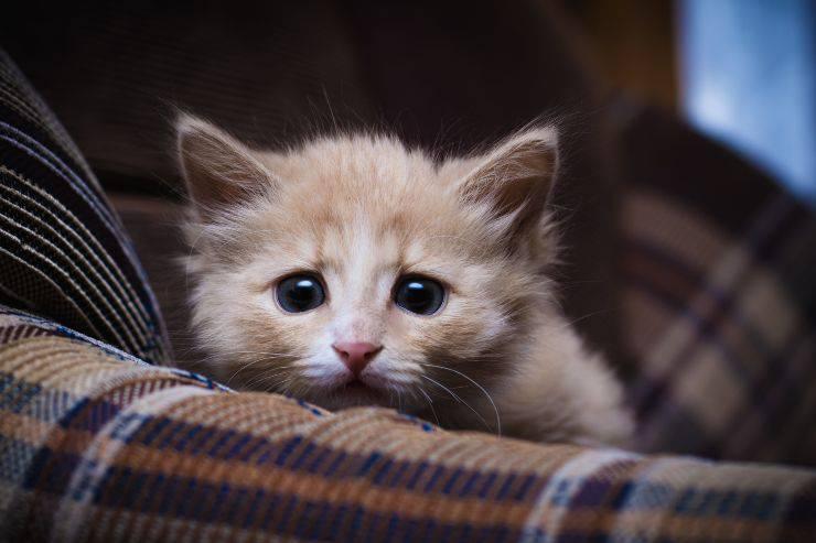 i rumori che spaventano il gatto