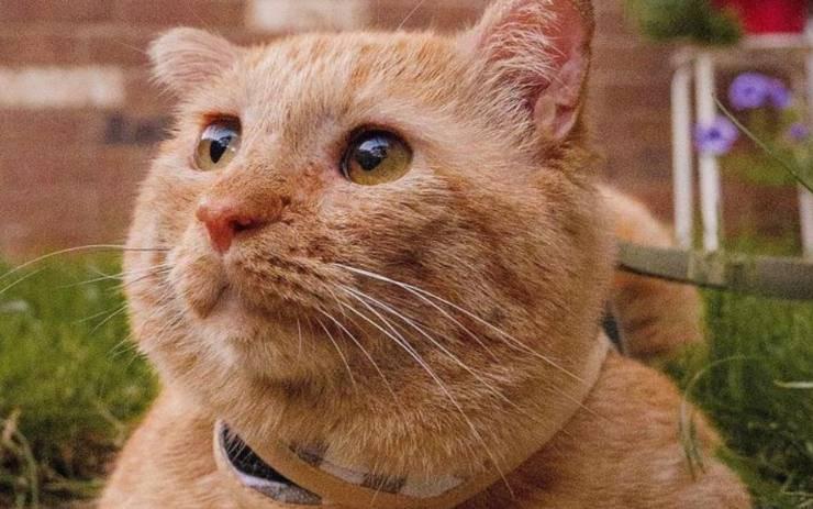 gatto triste trasformazione
