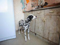 I cani possono sentire le perdite di gas