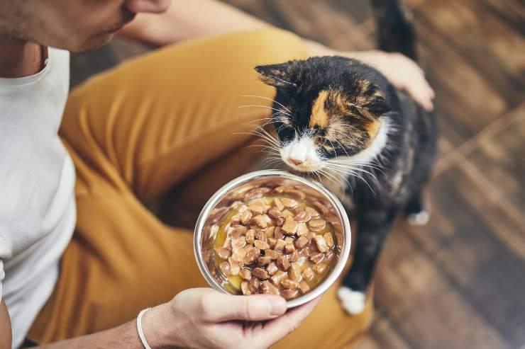 i gatti preferiscono il cibo caldo o freddo