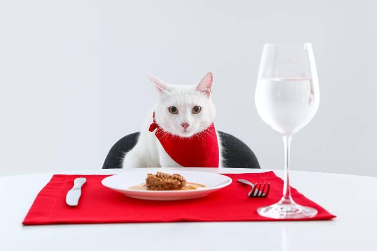 i pasti del gatto