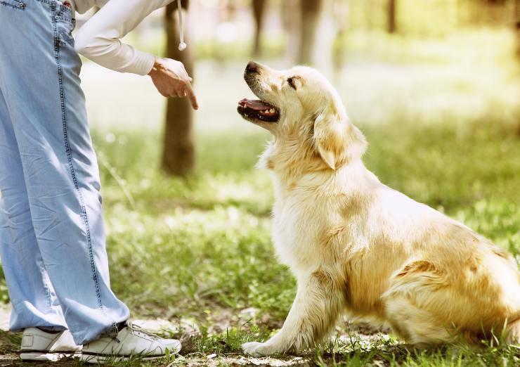 il cane ascolta