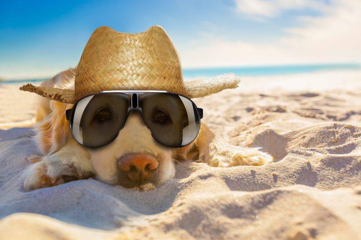 il cane al sole può stare