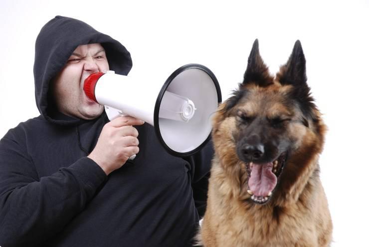 il cane sbadiglia quando lo rimproveri