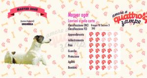 Magyar agar scheda razza