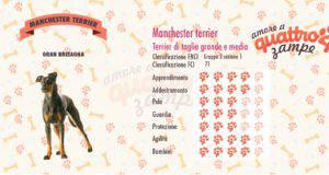 Manchester terrier scheda razza