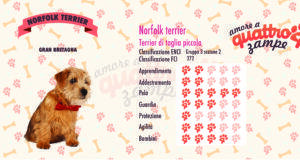 Norfolk terrier scheda razza