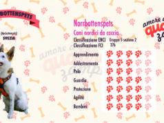 Norrbottenspets scheda razza