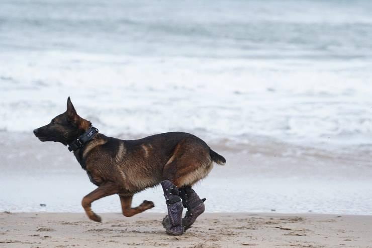 Kuno il cane che riceverà la medaglia al valore