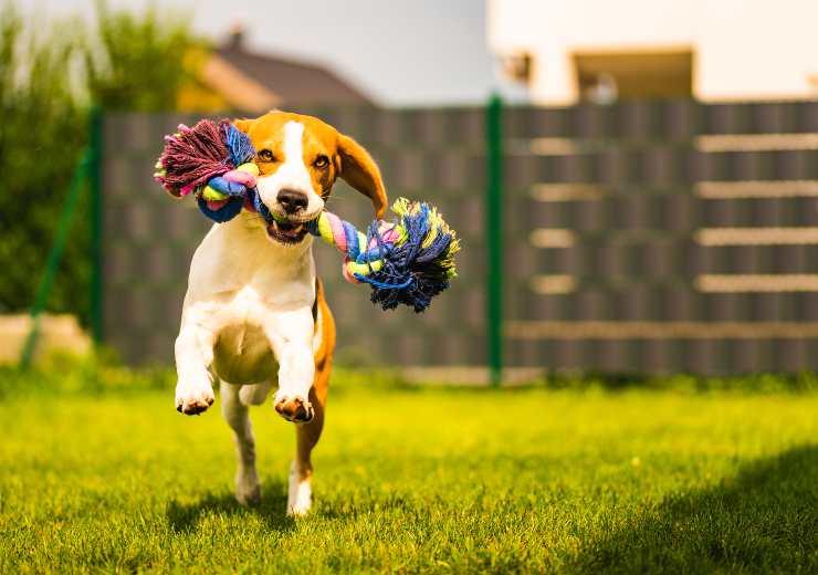 l importanza del gioco per il cane