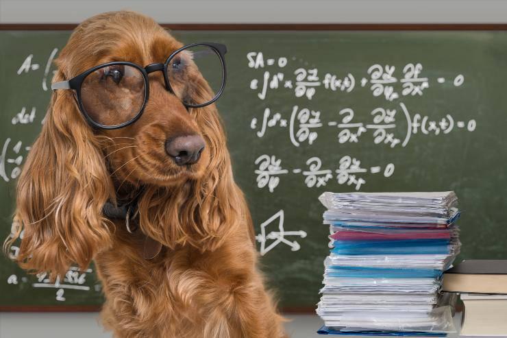 le cose che il cane ci insegna