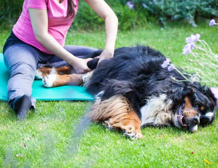 manovre per terapie al cane