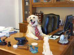 portare il cane in ufficio