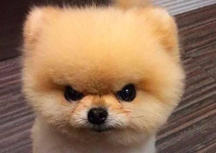 cani più nervosi e scontrosi