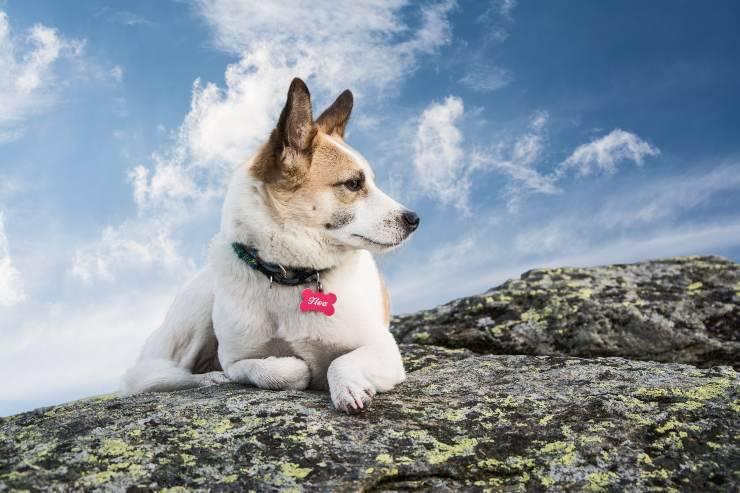 medaglietta cane