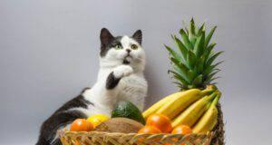 Odori che i gatti non sopportano