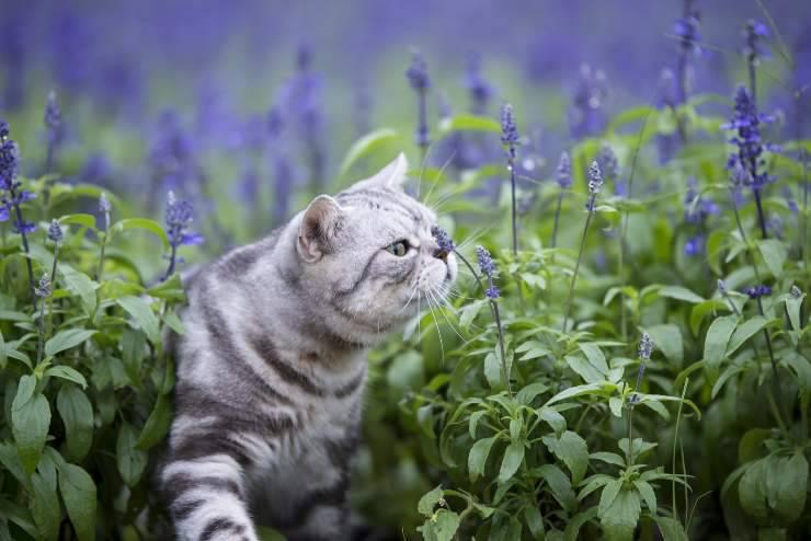 Odori che piacciono ai gatti