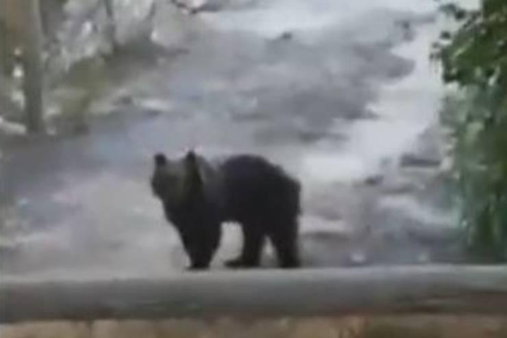 abruzzo famiglia orso