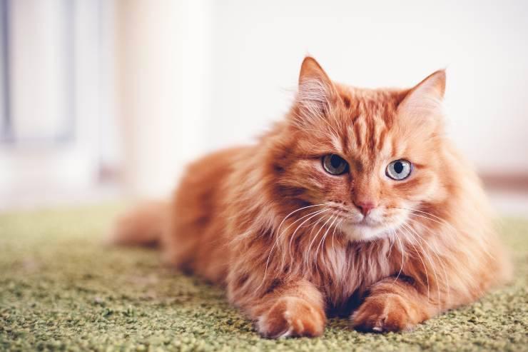 perché il gatto cambia carattere