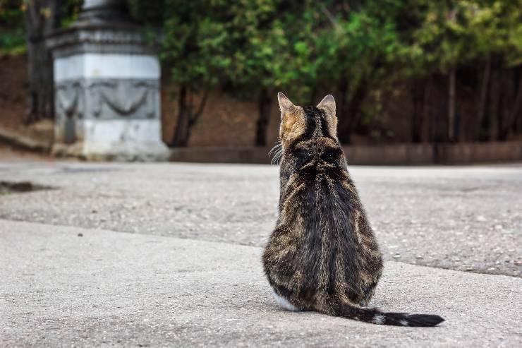 perché il gatto da le spalle