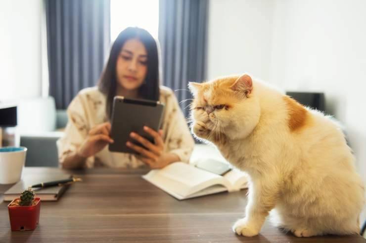 Perché i gatti non ascoltano il padrone