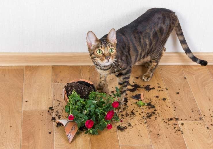 Perché il gatto rompe le piante e come evitarlo
